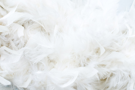line up: white feathers Stock Photo