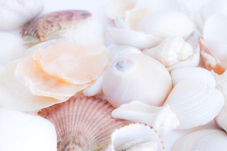 fibonacci number: shells Stock Photo