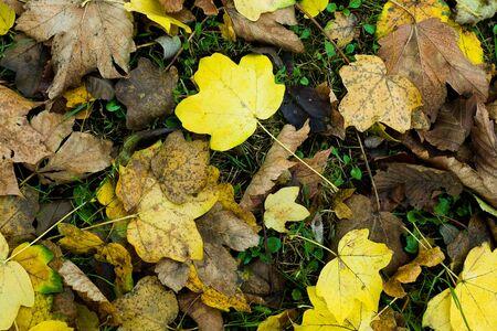 folliage: autumn leaves