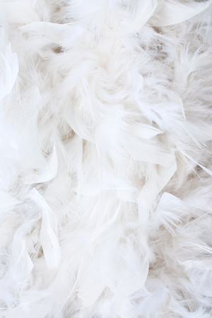 feather quill: white feathers Stock Photo