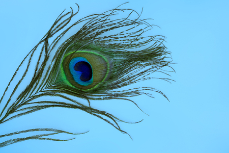 Close up of a peacock feather - textspace