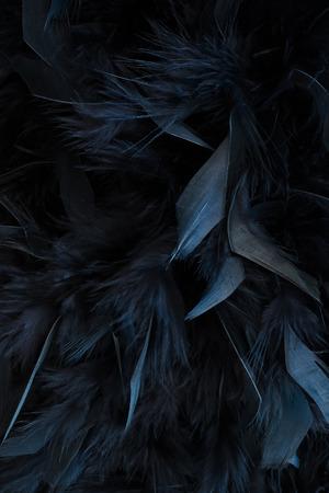 plumes noires Banque d'images