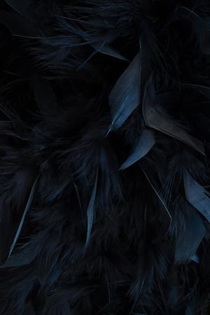 plumes noires