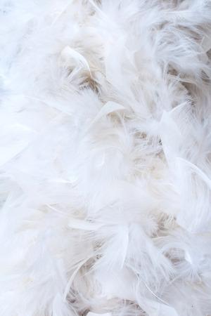 white feathers: white feathers Stock Photo