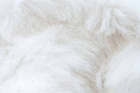 white fur: close up of white fur - textured background