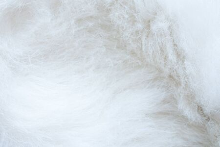 close up of white fur textured background Stock Photo