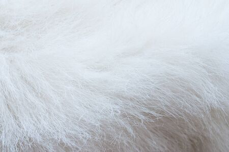 white fur: close up of white fur