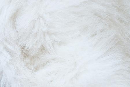 white fur: close up of white fur