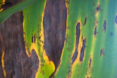 jungle colors - close up of a leaf Banco de Imagens