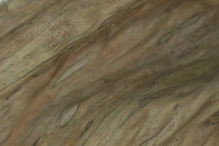 infirm: jungle colors - close up of a brown leaf Stock Photo