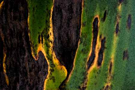 abstract paint: jungle colors - close up of a leaf Stock Photo