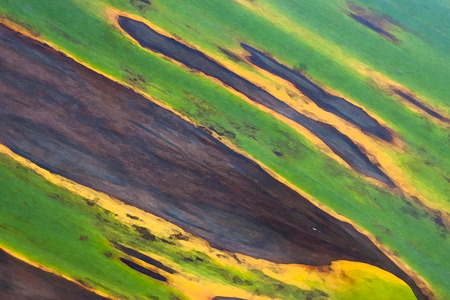 jungle colors - close up of a leaf Banco de Imagens
