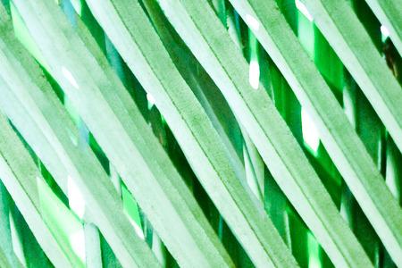 khakis: close up of green palm leaf - graphic illustration background Stock Photo