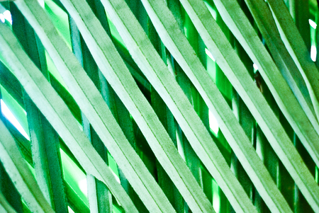 close up of green palm leaf - graphic illustration background Banco de Imagens