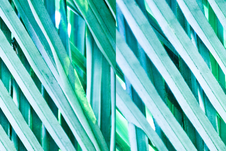 greenish blue: close up of green palm leaf - graphic illustration background Stock Photo