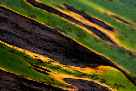 khakis: jungle colors - close up of a leaf Stock Photo