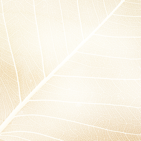 infirm: white silhouette of a leaf - abstract graphic background Stock Photo