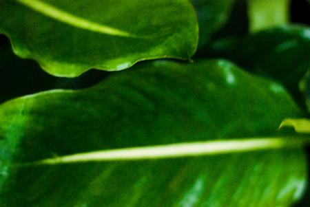 infirm: jungle colors - close up of a green leaf