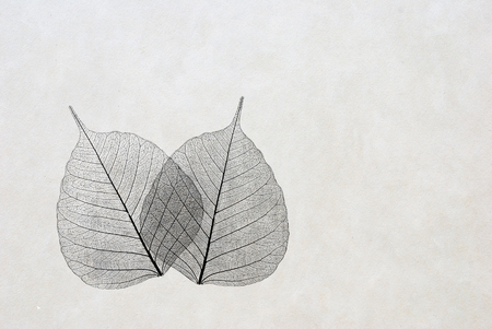 Blätter - Silhouette - elegant Grußkarte Standard-Bild