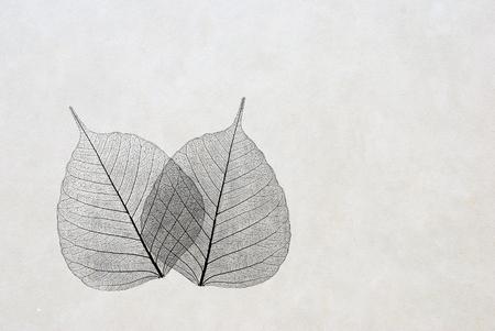 foglie - silhouette - elegante biglietto di auguri Archivio Fotografico
