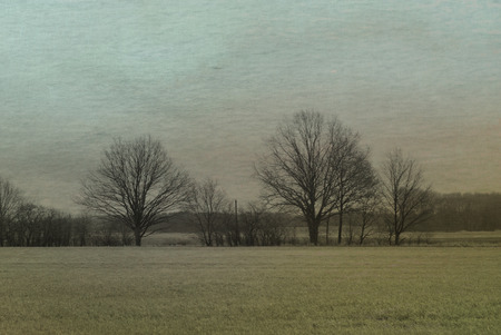 bleak: trees stands on horizon in empty white field. Watercolors Background - Vintage art creation
