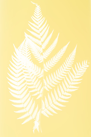 frond: fern frond silhouette - white silhouette on yellow color background- symbol of New Zealand Stock Photo