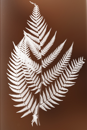 frond: fern frond silhouette - white silhouette on brown background symbol of New Zealand Stock Photo