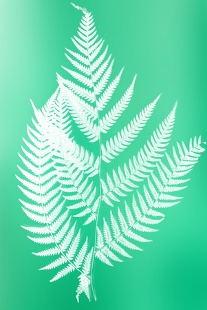 frond: fern frond silhouette - white silhouette on green color background symbol of New Zealand