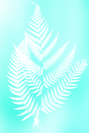 frond: fern frond silhouette - white silhouette on turquoise color background symbol of New Zealand
