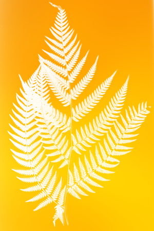 frond: fern frond silhouette - white silhouette on orange and yellow color background- symbol of New Zealand