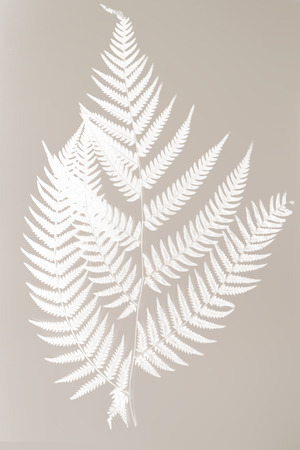 frond: fern frond silhouette - white silhouette on gray background symbol of New Zealand