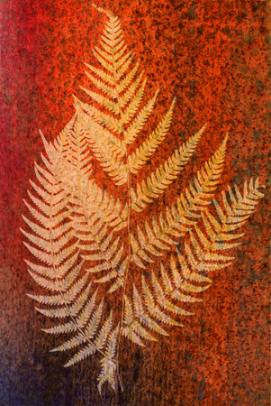 frond: fern frond silhouette - bright silhouettes on color background - symbol of New Zealand