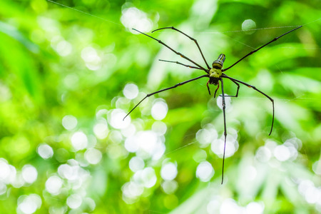 Spider with its web in national park of Thailand Stock Photo