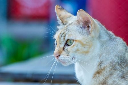 Lovely stripped cat with blurred background Stock Photo