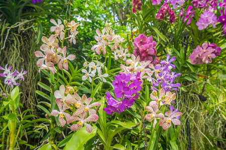 selectively: Various kinds of orchid flowers in flower plant selectively focus. Stock Photo