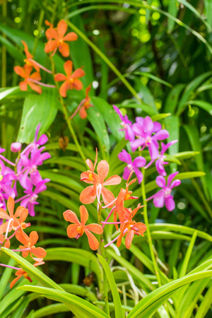 selectively: Orange and purple orchid flower in flower plant selectively focus. Stock Photo