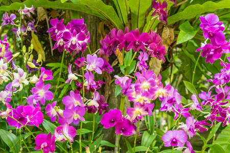 selectively: Purple orchid flower in flower plant selectively focus Stock Photo