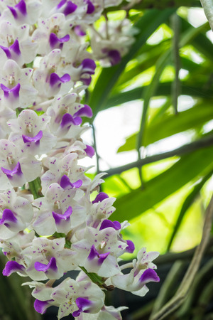 selectively: White orchid flower in flower plant selectively focus.