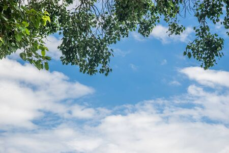 pipal: Clear blue sky with Bothi tree on upper end