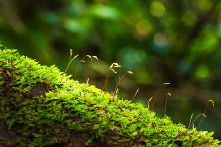 Green moss growing on decayed tree trunk in rainy season in rain forest of national park of Thailand Stock Photo