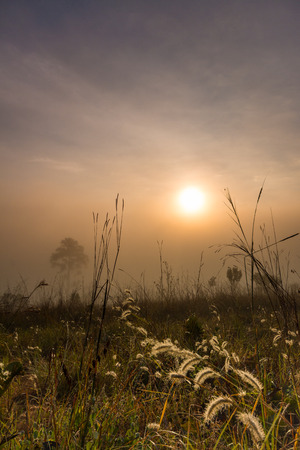 Beautiful sunrise with foggy environment in national public park of Thailand