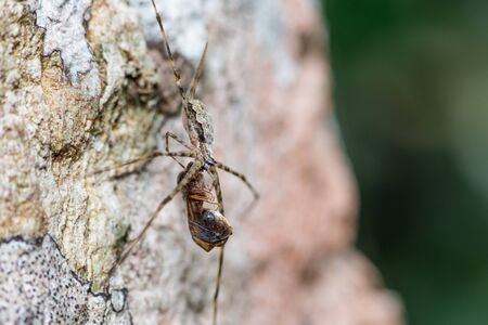 Brown striped spider eating insect on tree trunk in forest Imagens