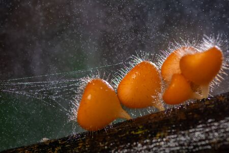 Beautiful orange hairy mushroom growing on tree trunk with water splashing as background in forest
