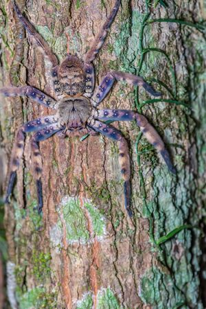 Brown spider on tree trunk in forest