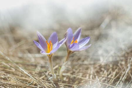 spring little Flower Standard-Bild