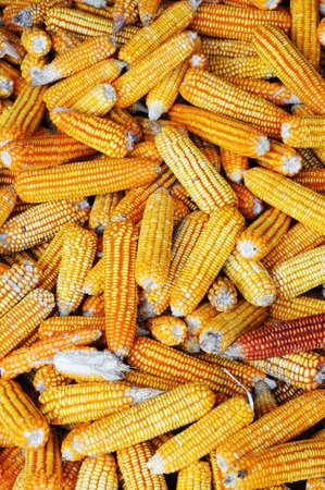 elote: Pila de granos para la alimentación animal Foto de archivo