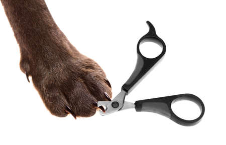 claw scissors and a paw with claws - selective focus on the point of interest where scissors meet a claw Stock Photo