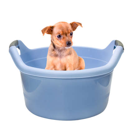 small dog sitting in a bowl