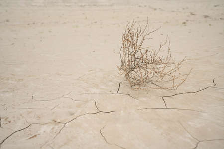 In a dry river bed lies a bush that is driven by the wind. The earth has deep furrows from the drought Stock Photo