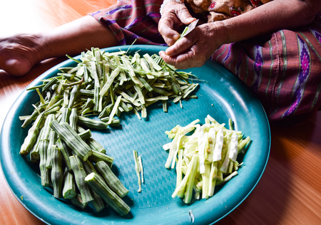 the drumstick tree: Horse radish tree cooking